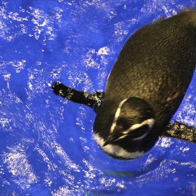 sumida-aquarium-25.jpg