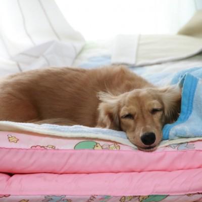 sleeping-mame-1.jpg