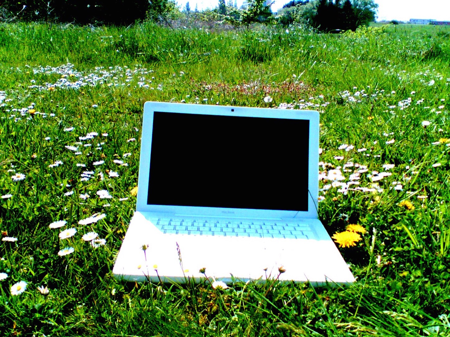 Macbook and flowers