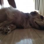 iPhone-6s-Plus-Photo-Sample-01.jpg
