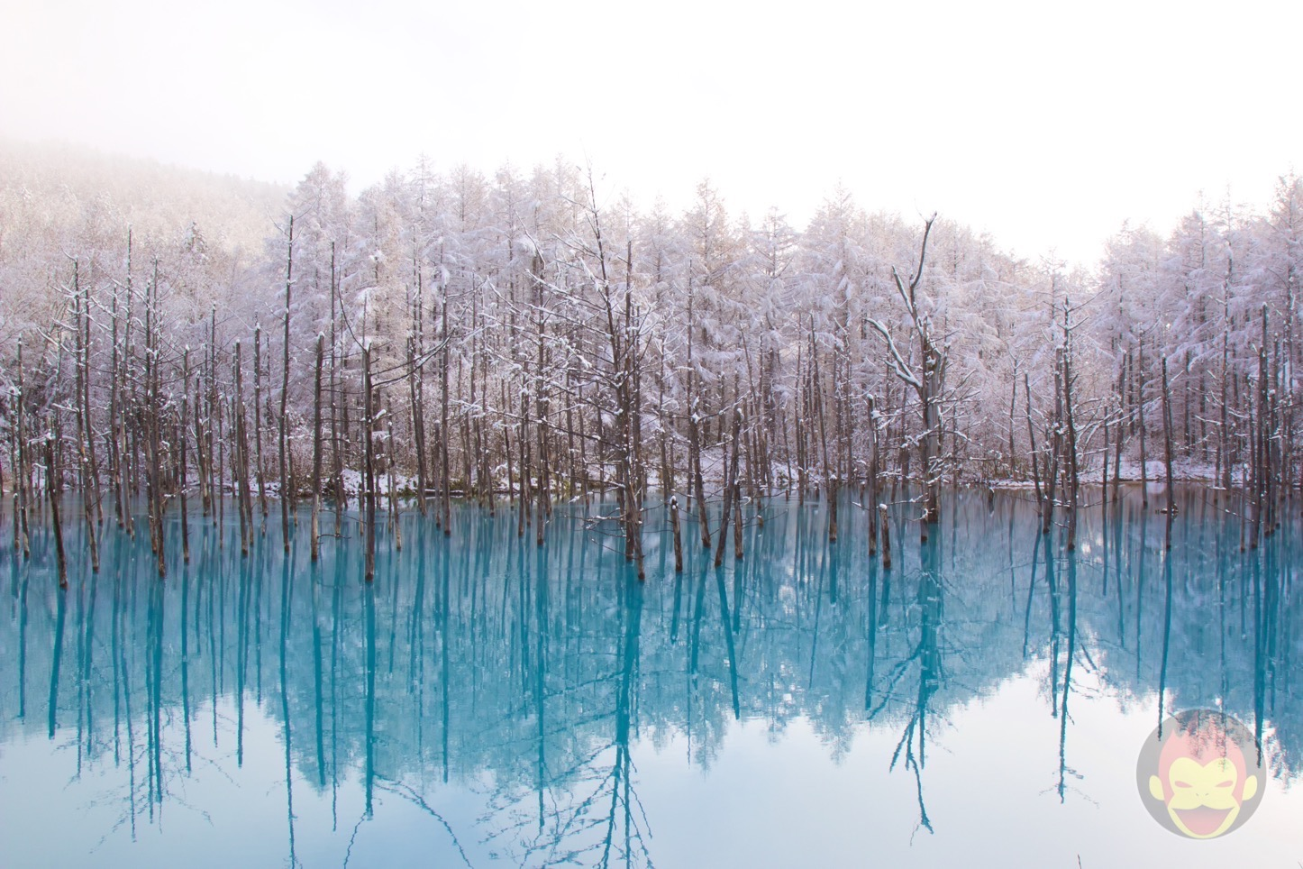 Macの壁紙でお馴染み 美瑛町にある 青い池 の美しさに見惚れた