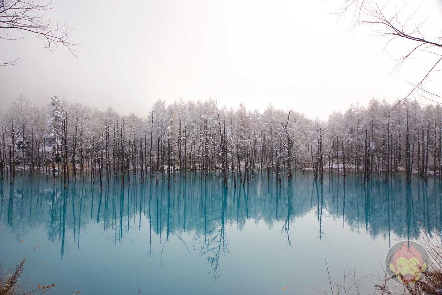 青い池(美瑛)