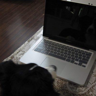 macbook-13inch-and-cute-dog.jpg