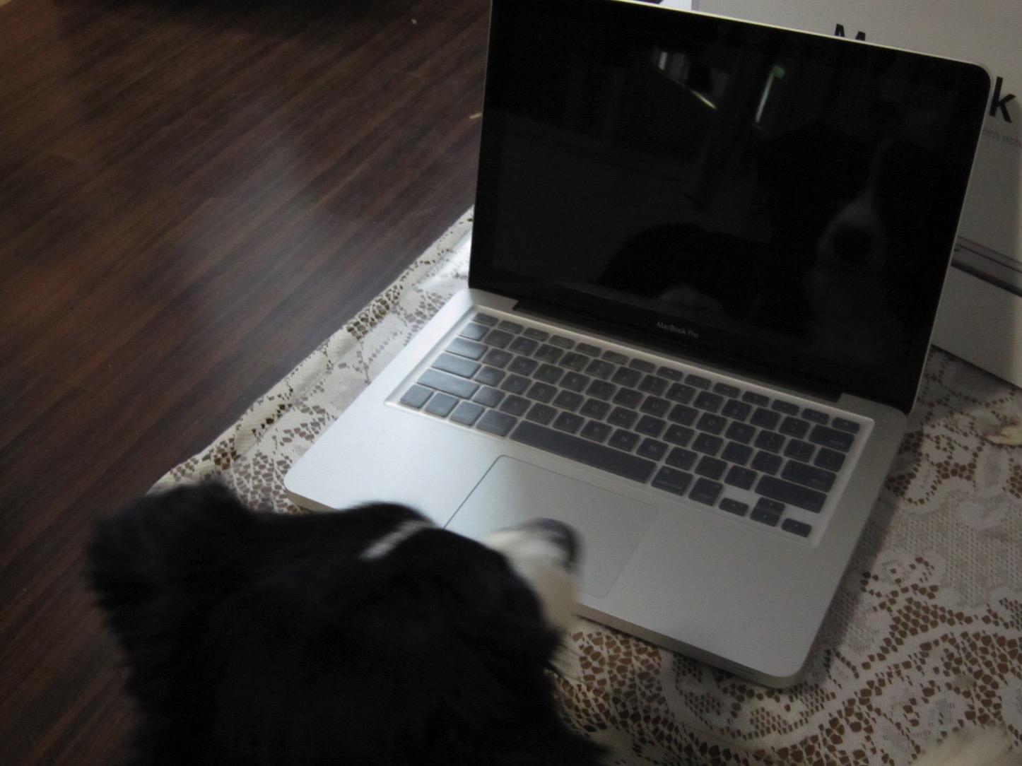 Macbook 13inch and cute dog