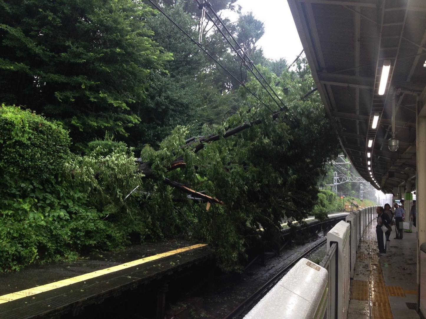 山手線、倒木で上下線運行停止