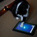 cat-playing-around-with-fish-app.jpg