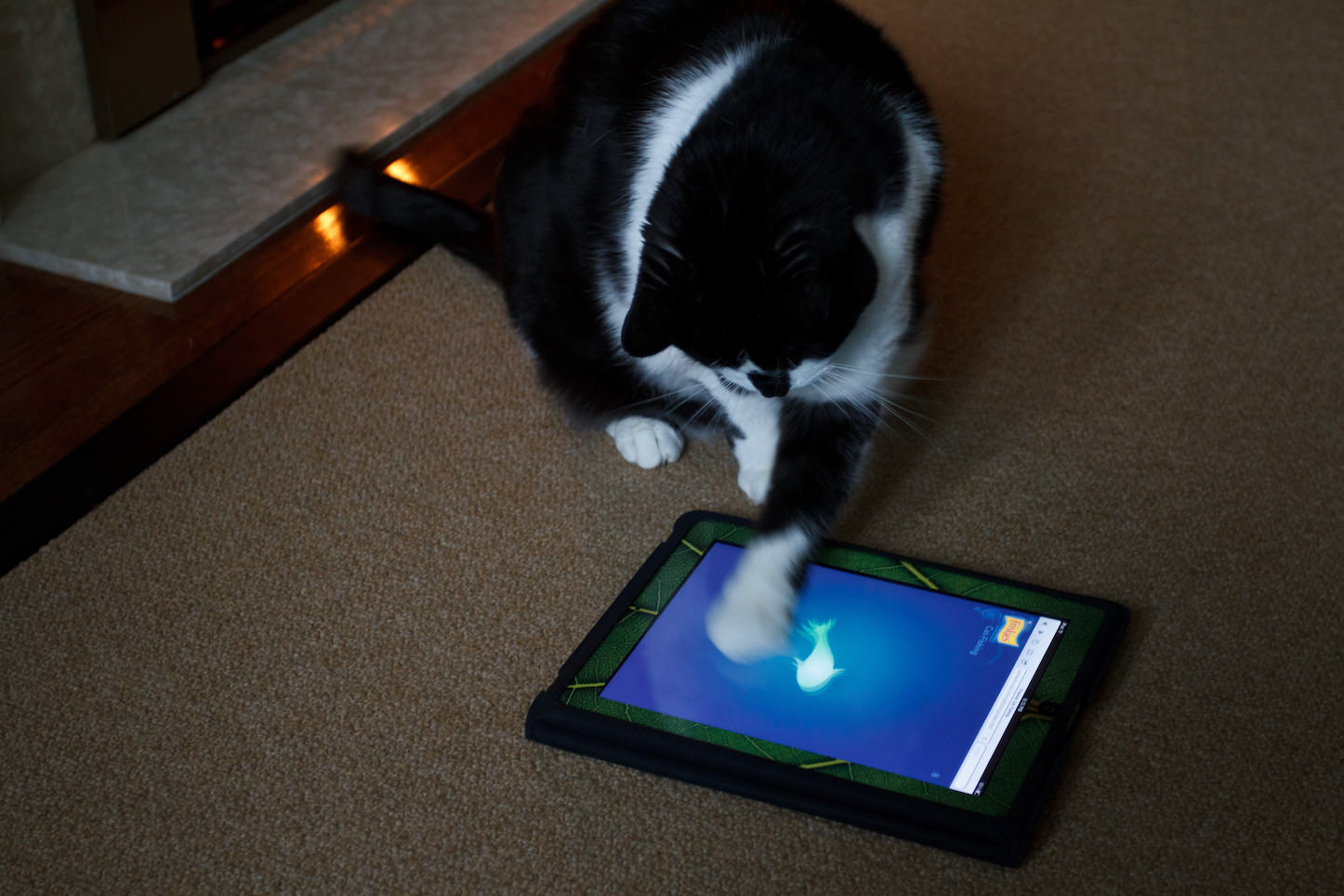 cat-playing-around-with-fish-app.jpg