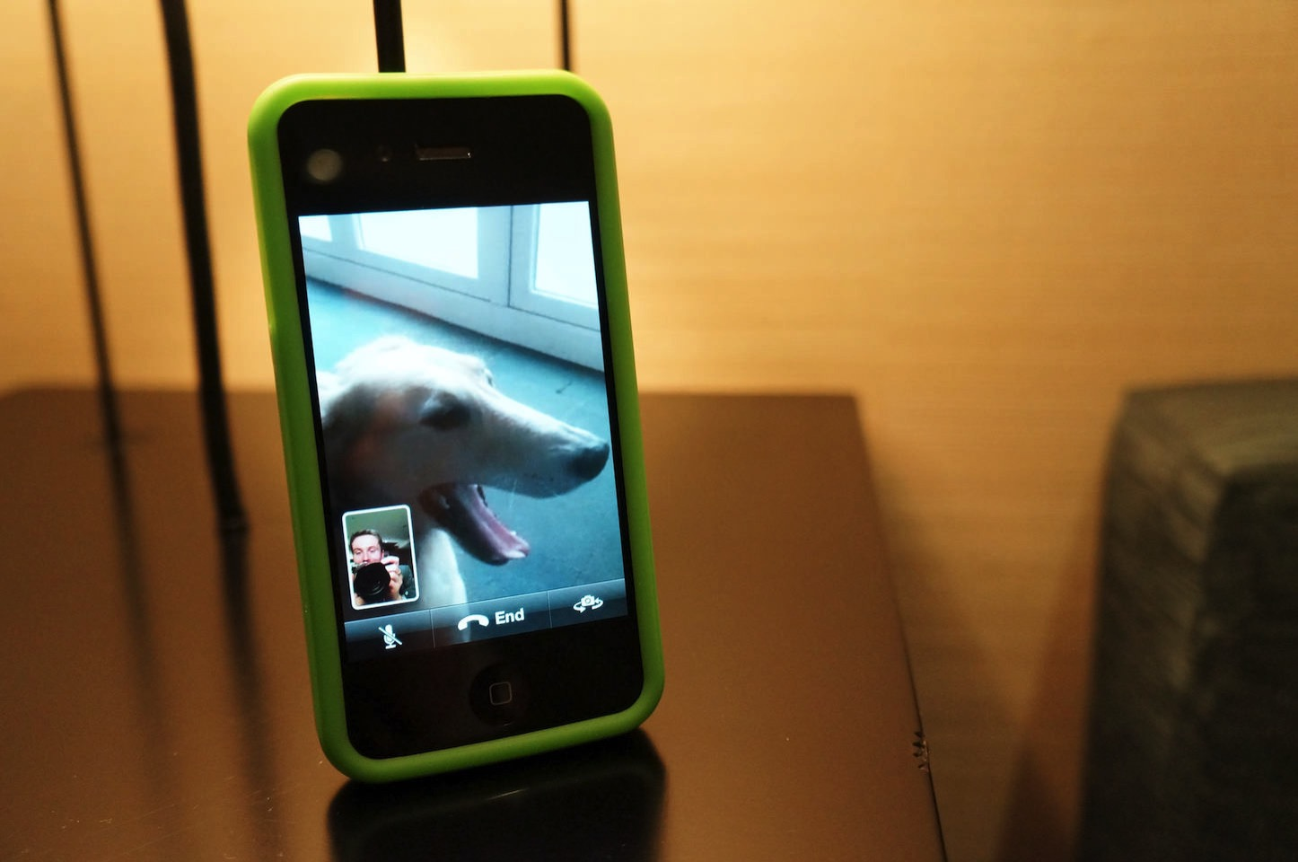 FaceTime Call With Dog