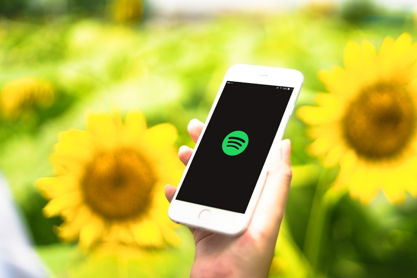 Spotify and Sunflowers
