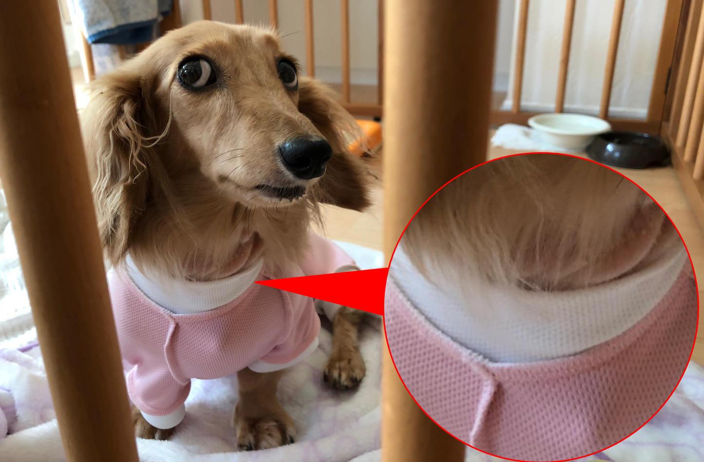 Dog-comparison-iPhone8Plus.jpg
