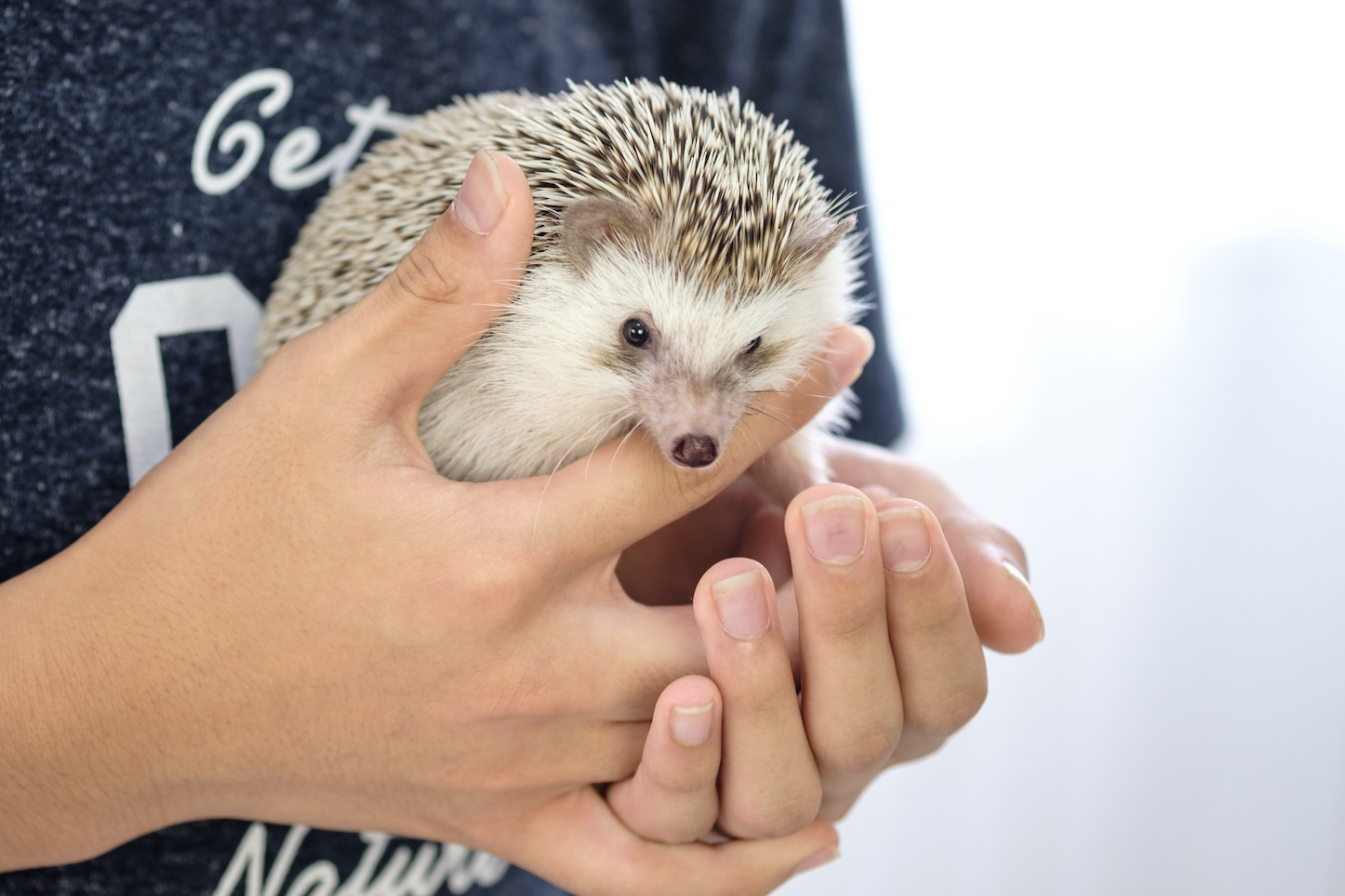 Hedgehog-Pakutaso-Photos-13