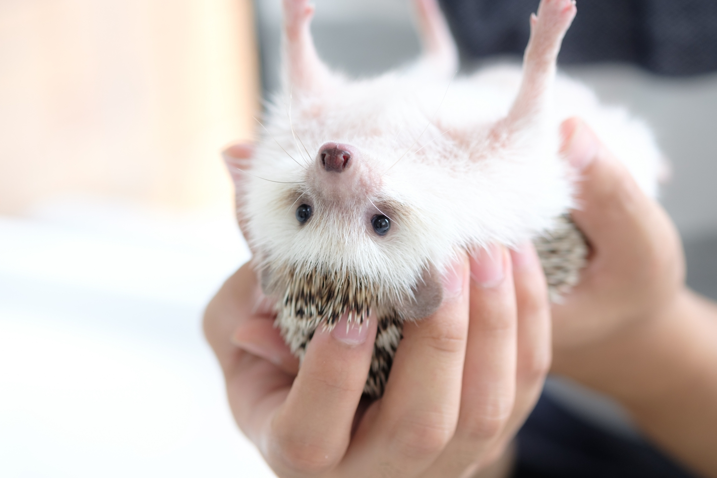 Hedgehog-Pakutaso-Photos-15