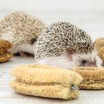 Hedgehog-Pakutaso-Photos-18.jpg