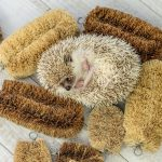 Hedgehog-Pakutaso-Photos-19.jpg