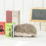 Hedgehog-Pakutaso-Photos-20