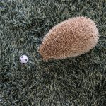 Hedgehog-Pakutaso-Photos-26.jpg