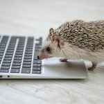 Hedgehog-Pakutaso-Photos-43.jpg