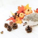 Hedgehog-Pakutaso-Photos-48.jpg