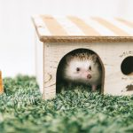 Hedgehog-Pakutaso-Photos-52.jpg