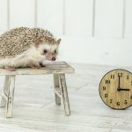 Hedgehog-Pakutaso-Photos-57.jpg