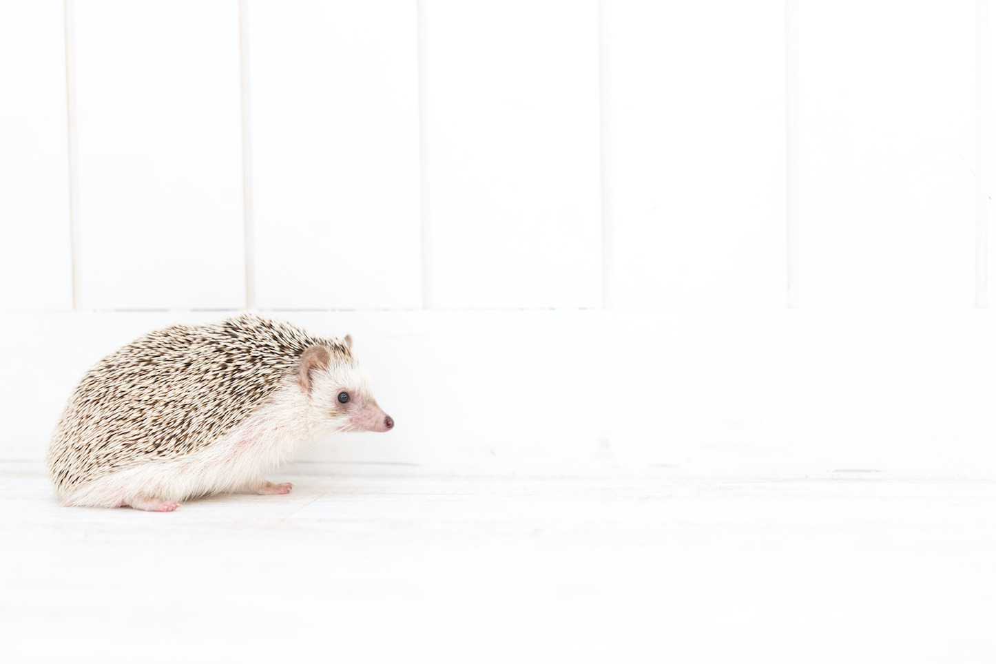 Hedgehog-Pakutaso-Photos-72.jpg
