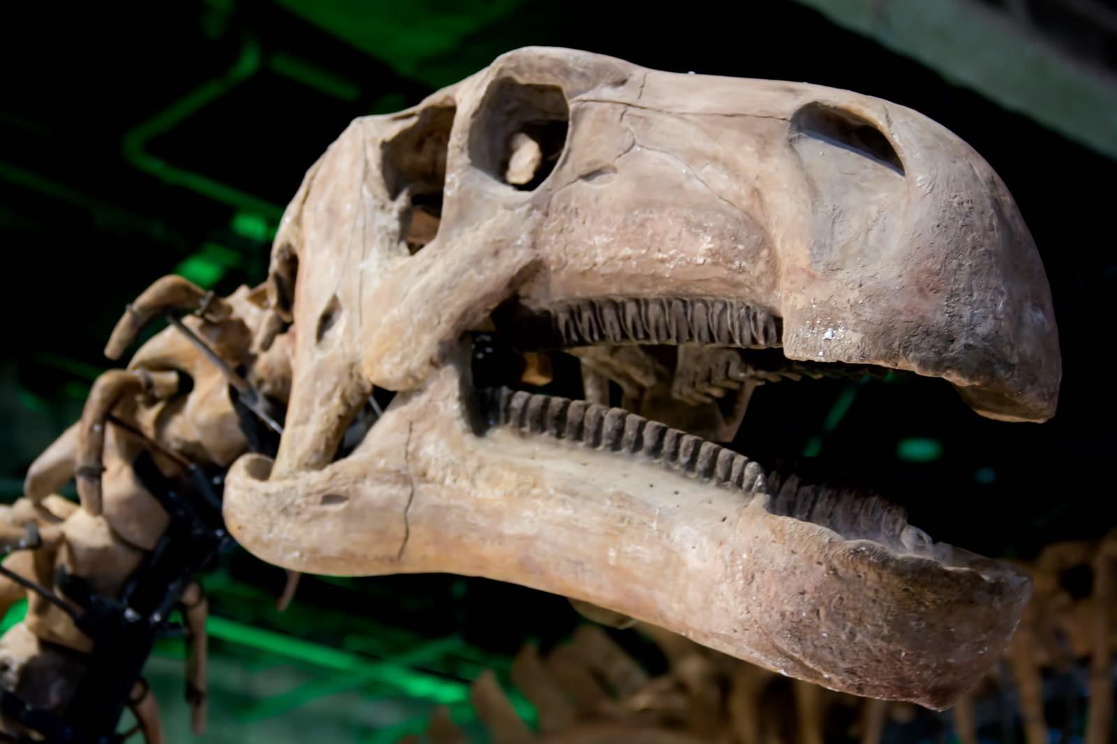 CKL_kyouryuunohyouhon_TP_V-dinosaur-day.jpg