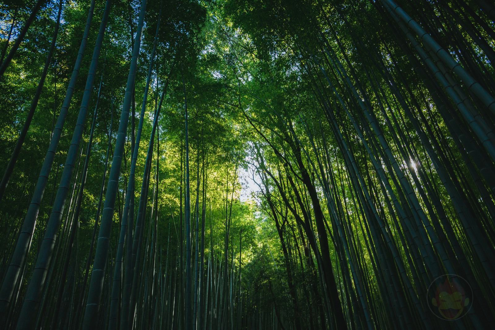 Kyoto Arashiyama Chikurin 02