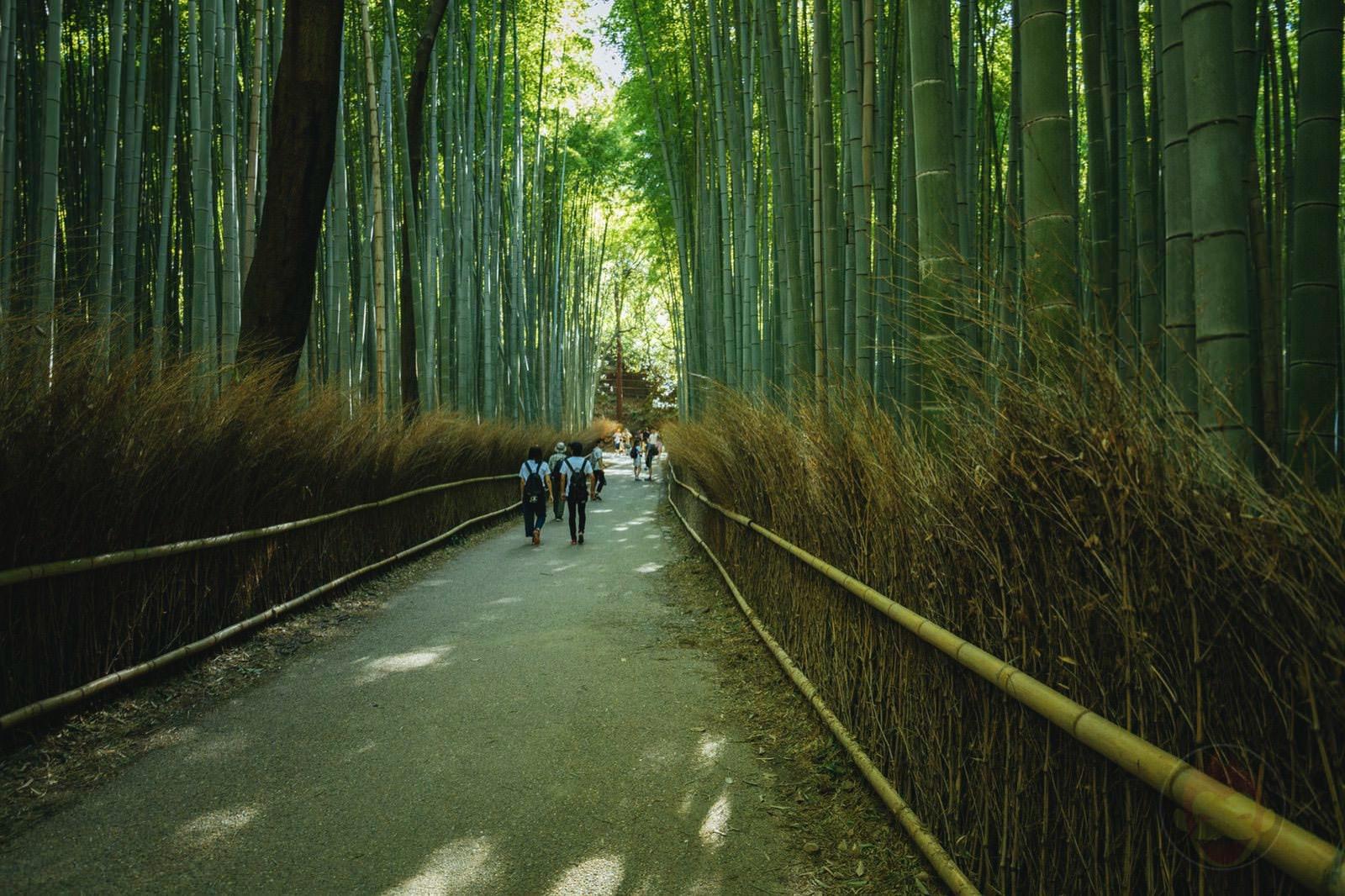 Kyoto Arashiyama Chikurin 05
