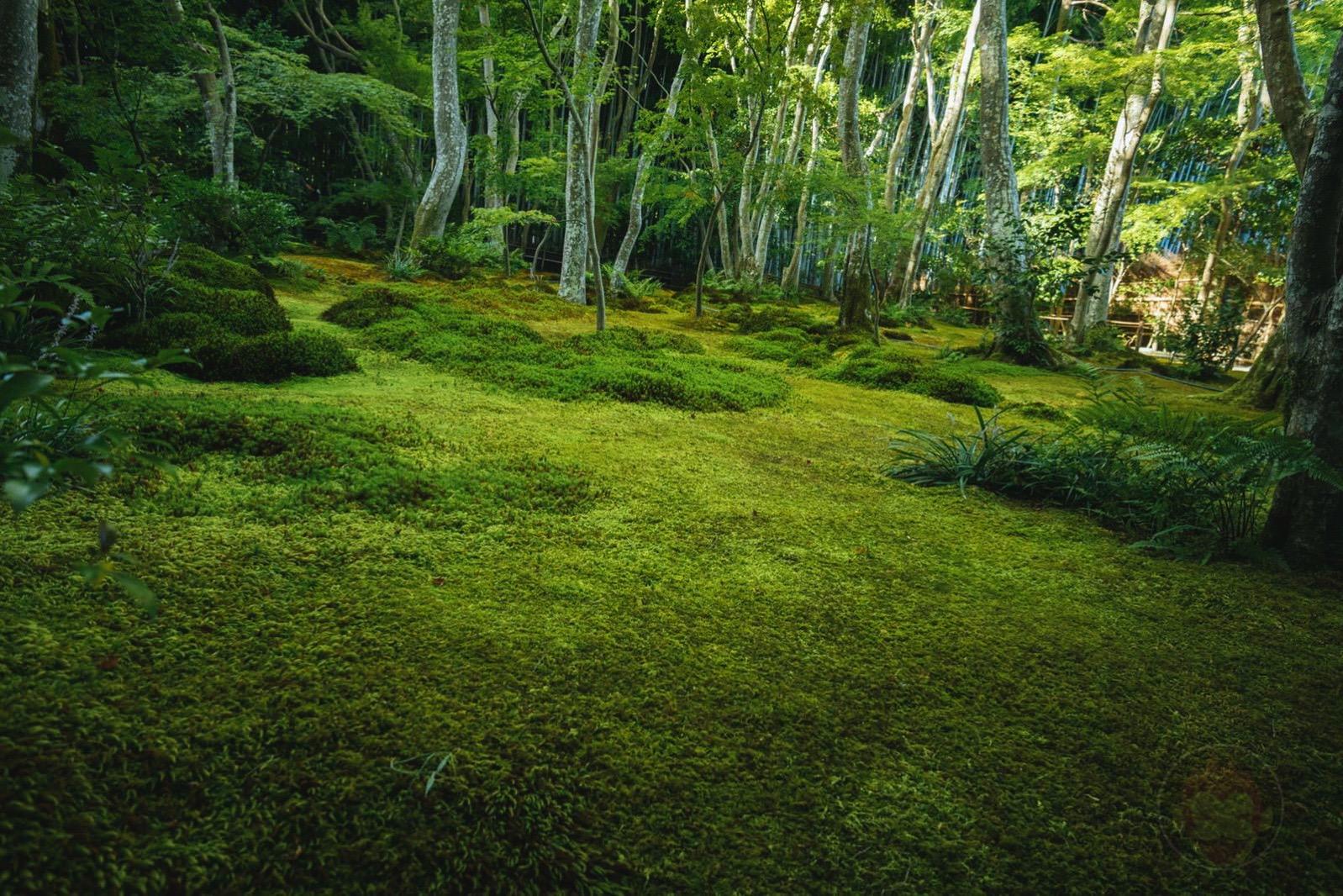 Kyoto Arashiyama Gioji 01