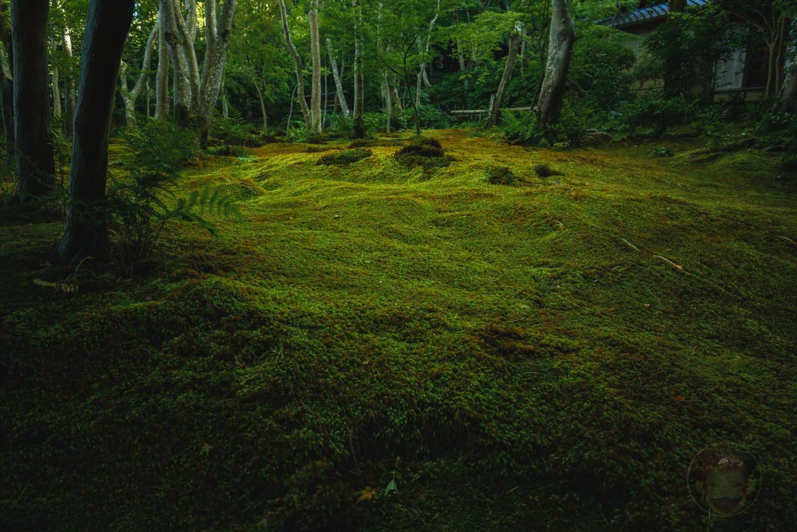 Kyoto Arashiyama Gioji 03