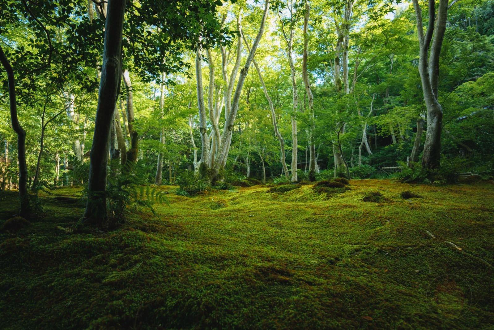 Kyoto Arashiyama Gioji 05