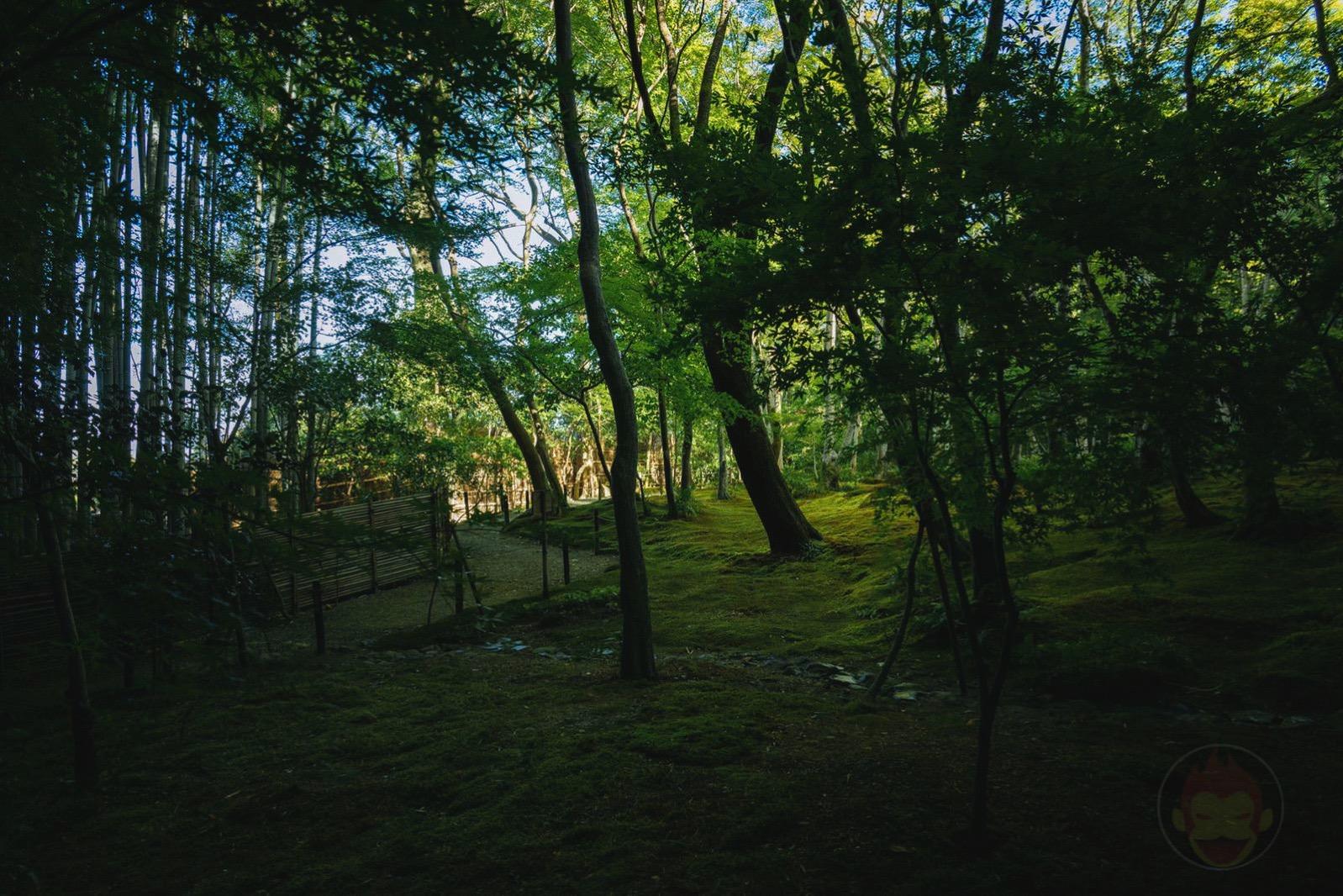 Kyoto Arashiyama Gioji 06