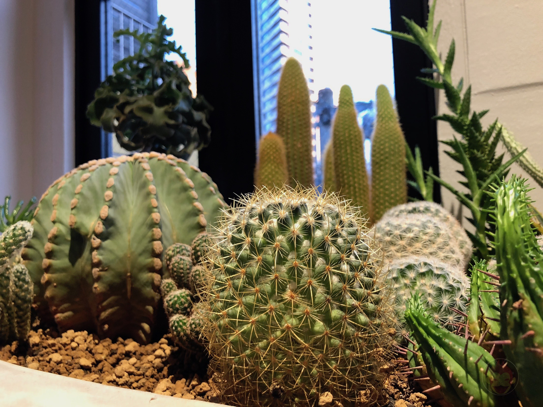 IPhone XS X Cactus comparison