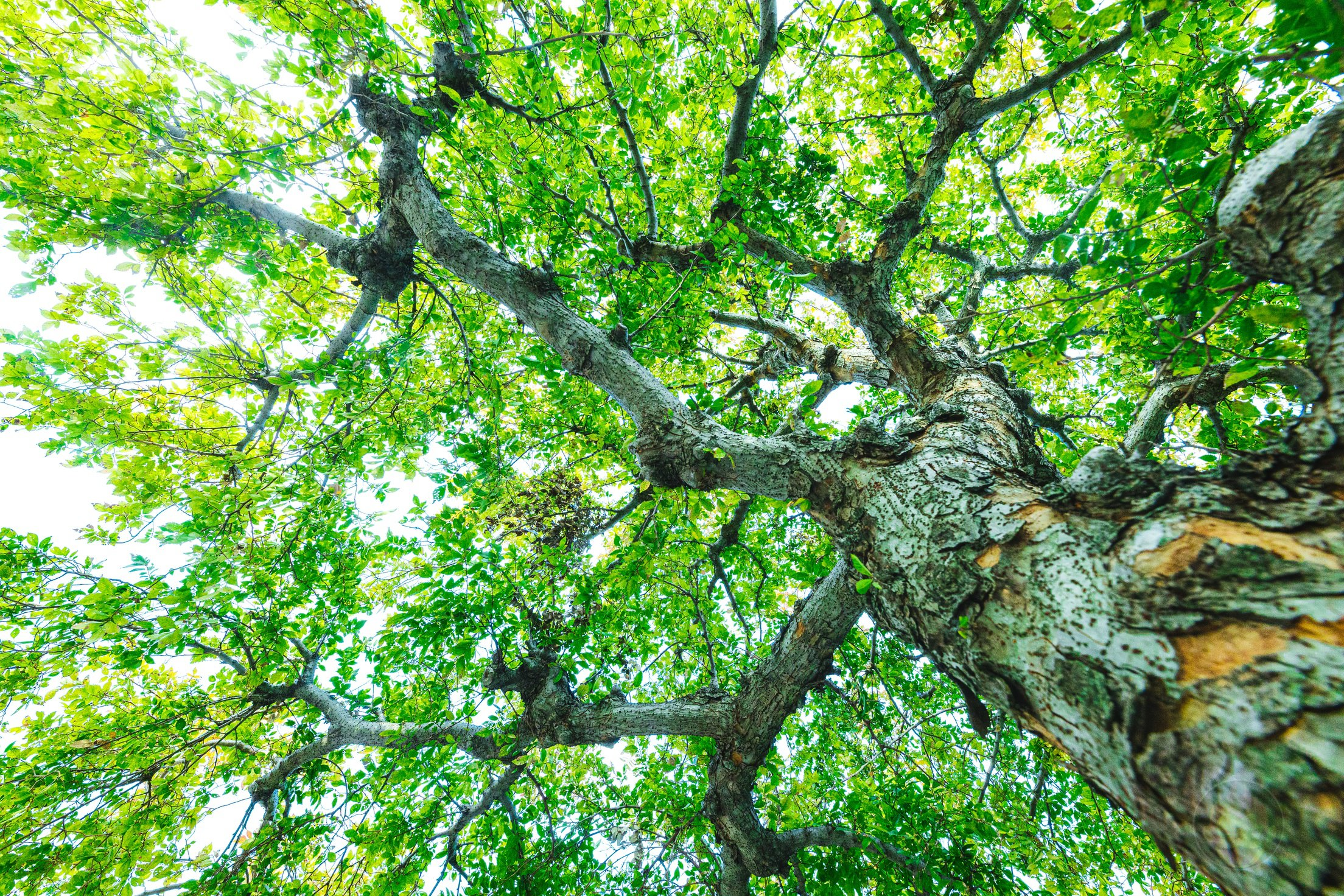 Tree-RAW-Data-EOSR-Photo-Sample-01.jpg