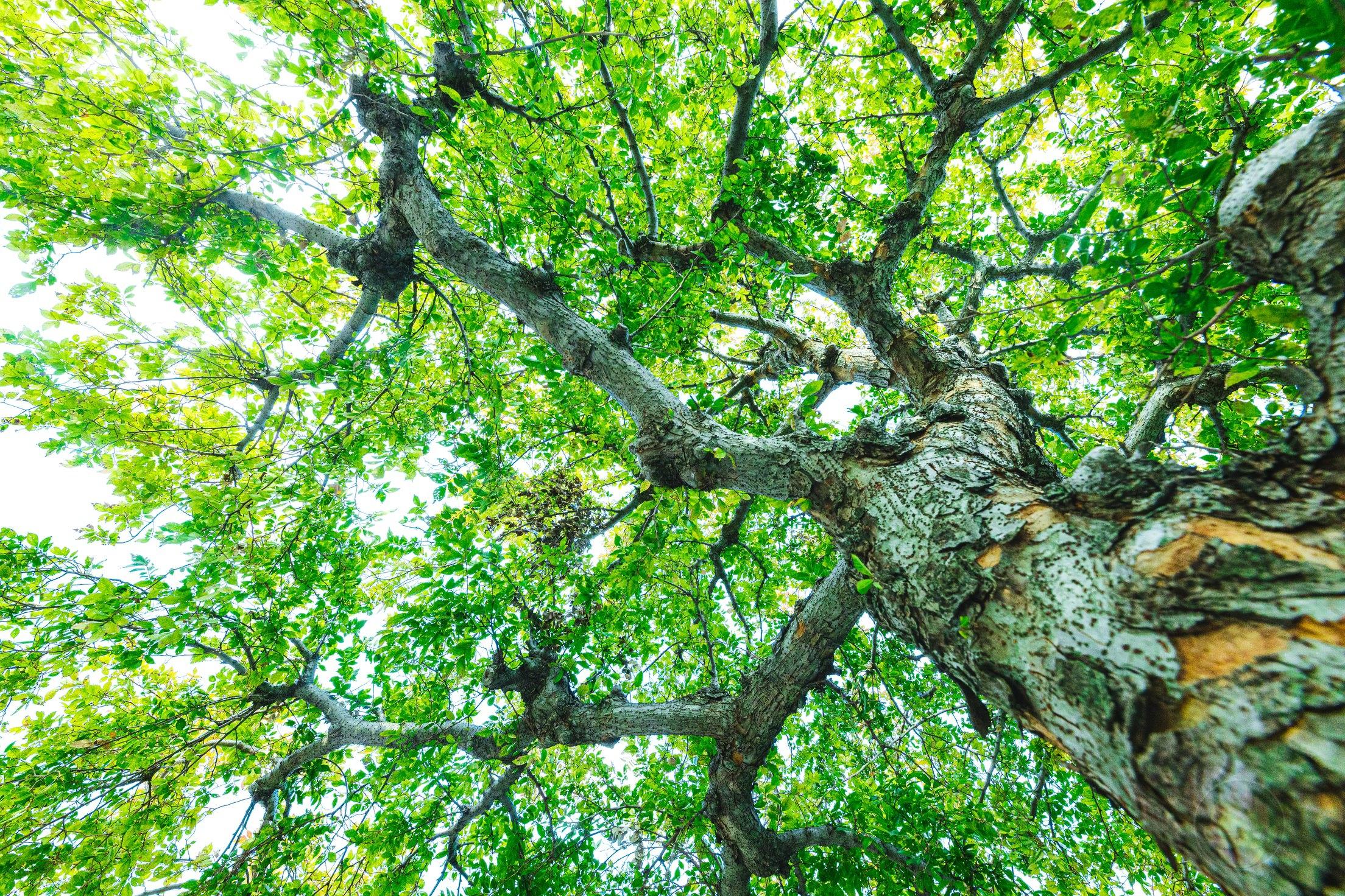 Tree-RAW-Data-EOSR-Photo-Sample-01.jpg