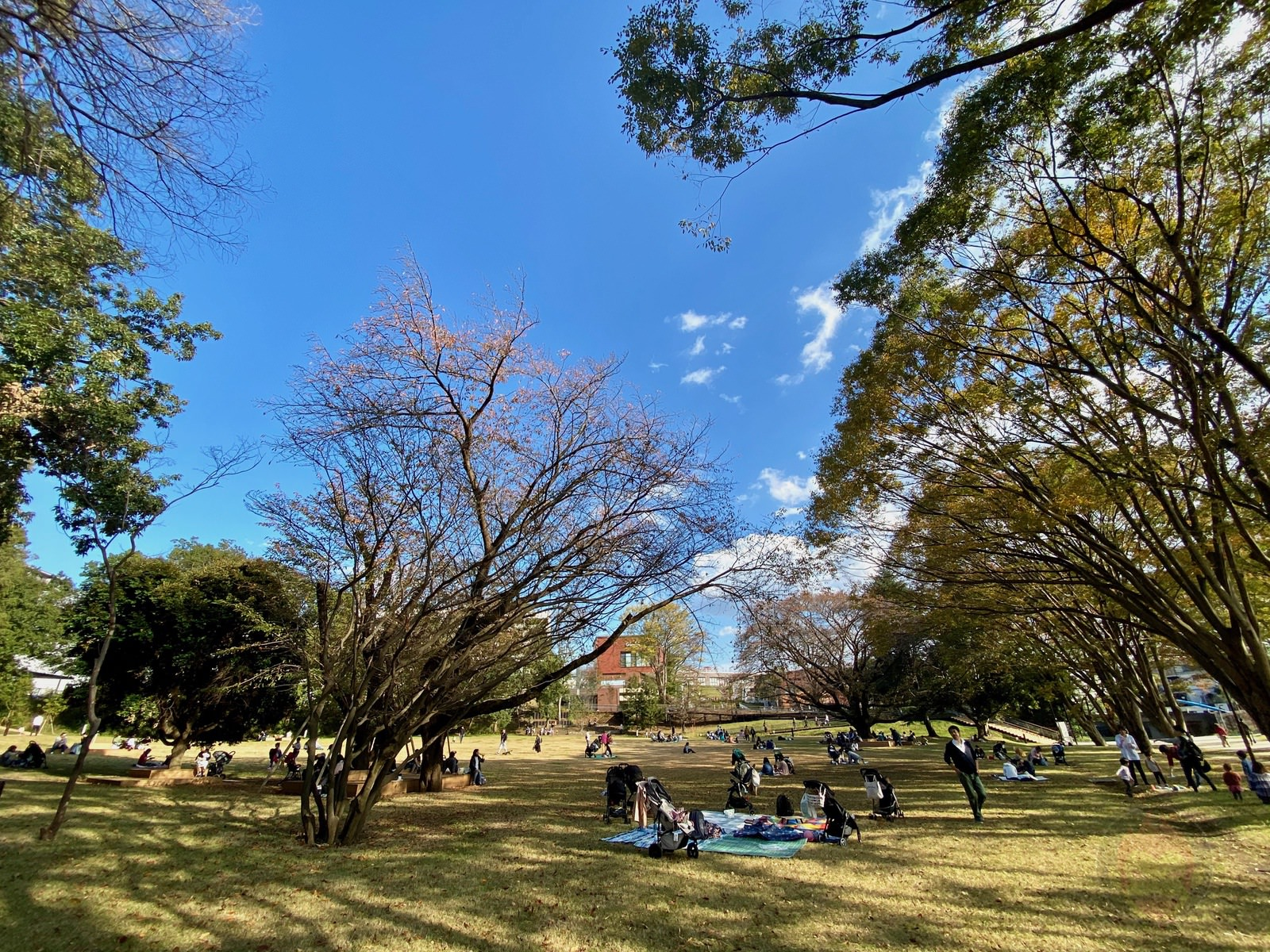 Tsuruma Park Minamimachid Grandberry Pak 01