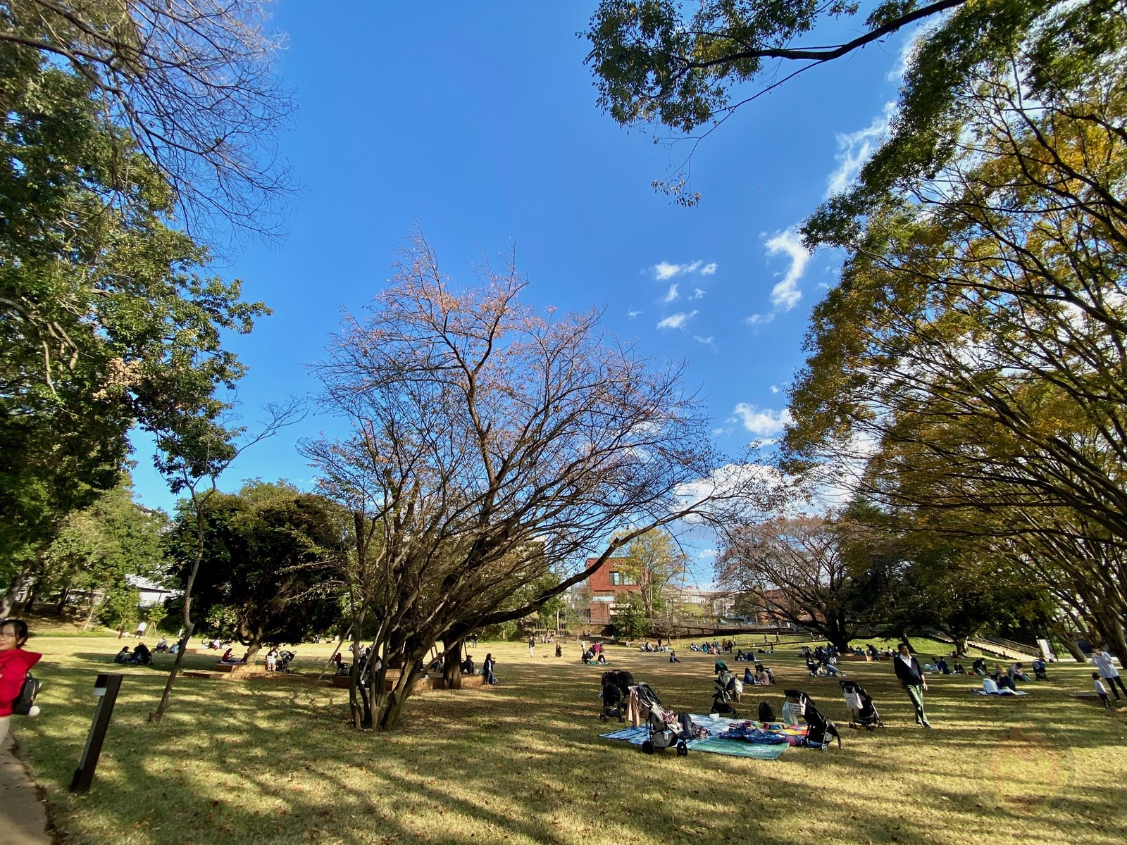 Tsuruma Park Minamimachid Grandberry Pak 12