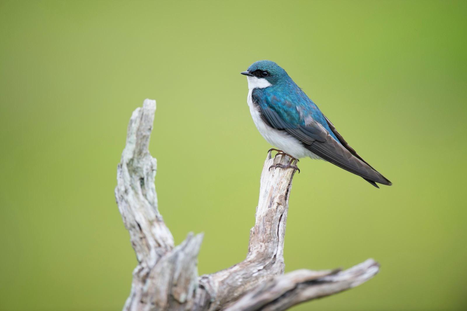 Ray hennessy FStJWCVFjS4 unsplash bird