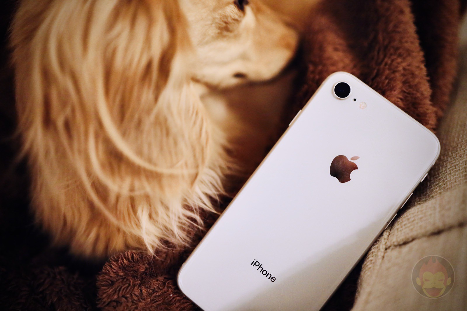 IPhone8 with my dog 01