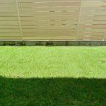 My-Lawn-after-a-few-weeks-01.jpeg