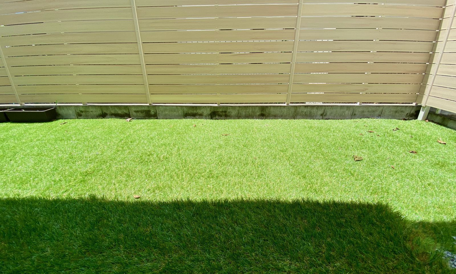 My Lawn after a few weeks 01